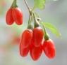 Goji Berry