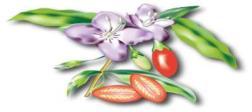 Goji-fruit-356x159